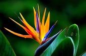 flower-181984_960_720